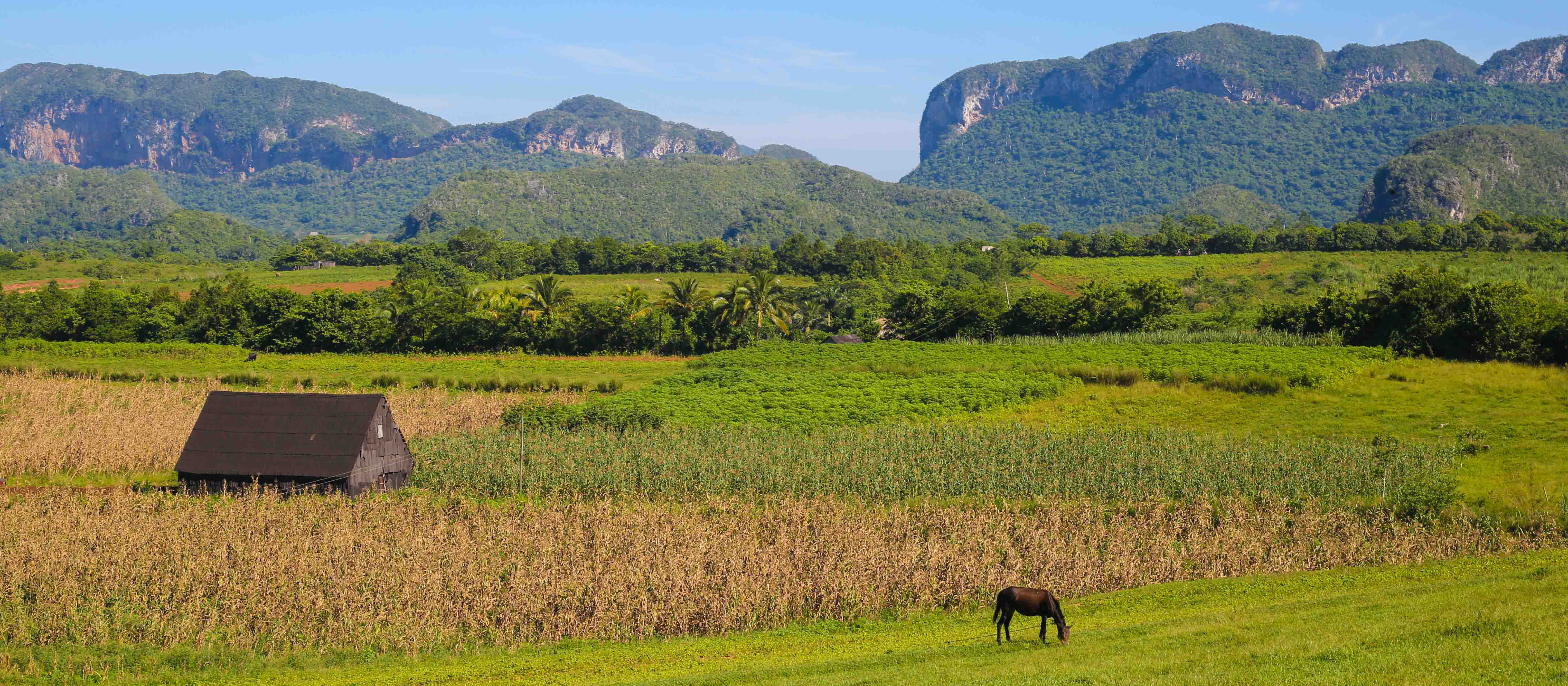Landscape of Vinales and tobacco plantation in Cuba